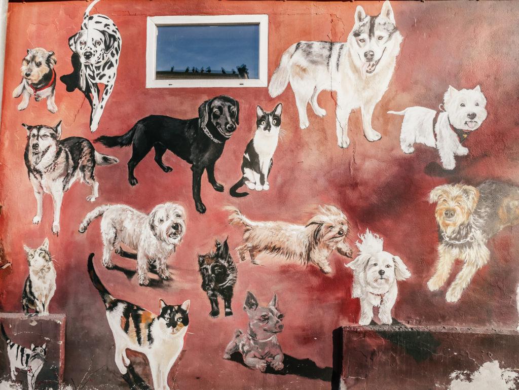 zwierzęta mural Wrocławw