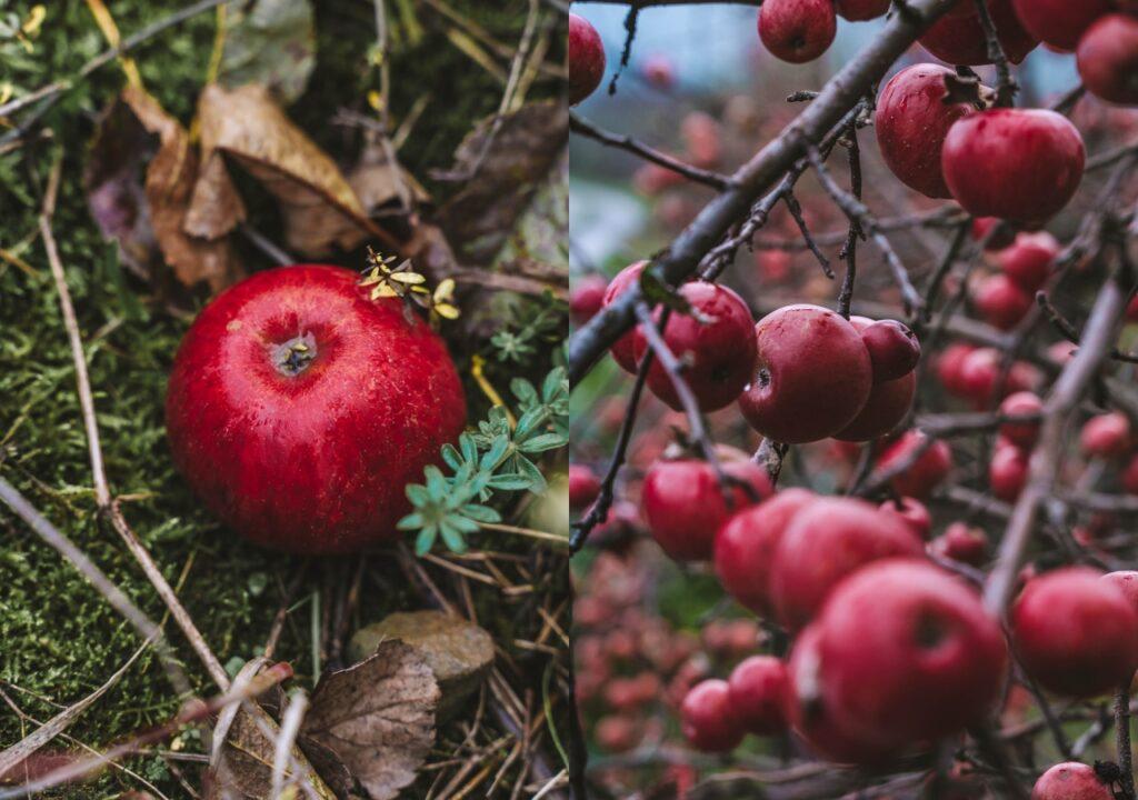 Tymbark - jabłka