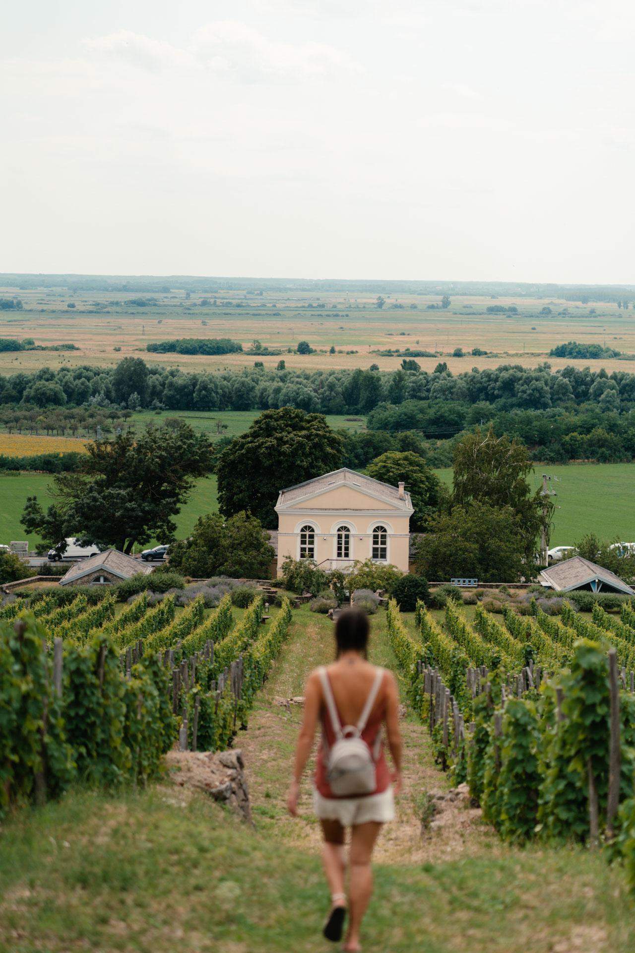 winnice Tokaj Węgry
